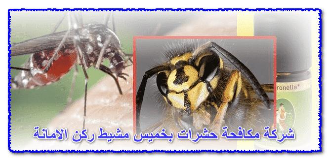 Photo of شركة مكافحة حشرات بخميس مشيط 0535304912 مع الضمان وخصومات 30%