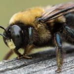القضاء علي الحشرات