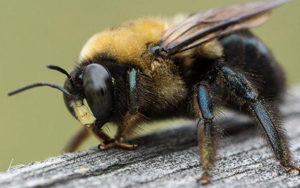 صورة القضاء علي الحشرات