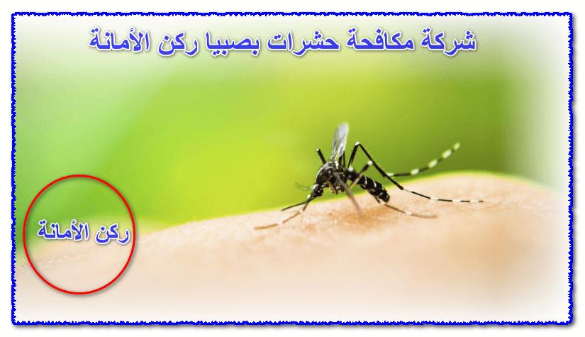 Photo of شركة مكافحة حشرات بصبيا 0552846128 أقوى أنواع المبيدات خصومات 30%