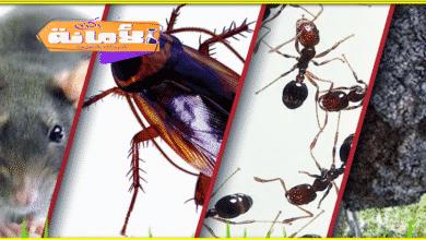 Photo of شركة مكافحة حشرات بابو عريش 0552846128
