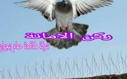 Photo of شركة مكافحة حمام بنجران وتركيب طارد للطيور  0535304912 الضمان
