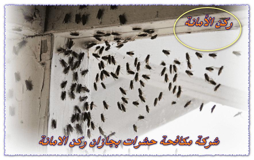 Photo of افضل شركة مكافحة حشرات بجازان 0552846128